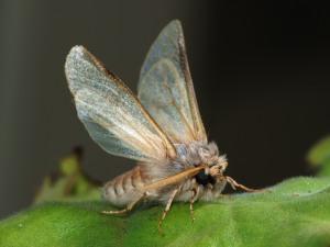 Moth_September_2008-3